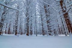 A neve cobriu a floresta Fotos de Stock