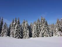 A neve cobriu a floresta do Natal imagem de stock royalty free