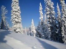 A neve cobriu montes & árvores Fotos de Stock Royalty Free