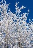 A neve cobriu o céu azul das filiais foto de stock royalty free