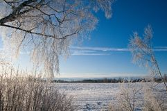 A neve cobriu o campo Imagens de Stock Royalty Free