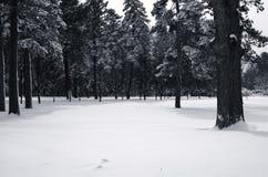 A neve cobriu o dossel imagens de stock