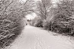 A neve cobriu o trajeto Fotografia de Stock Royalty Free