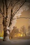 A neve cobriu o vidoeiro Foto de Stock