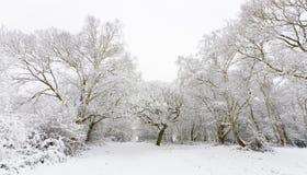A neve cobriu árvores Fotografia de Stock