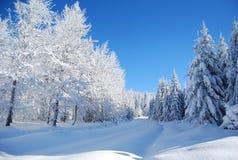 Neve congelada coberta pinhos Fotografia de Stock