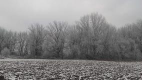 Neve congelata sulla foresta Immagini Stock Libere da Diritti