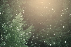 Neve contro lo sfondo della foresta Fotografie Stock Libere da Diritti