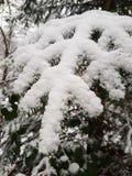 Neve da árvore fotos de stock