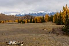 Neve da floresta do outono das montanhas Imagem de Stock