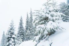 Neve da montanha do abeto vermelho do inverno inverno da paisagem imagem de stock