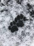Neve das pegadas do gato Imagem de Stock