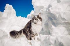 Neve de а do ‰ do inverno Ñ dos animais do gato Fotografia de Stock