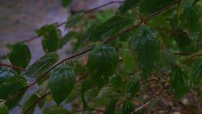 A neve de primeiro novembro nas folhas verdes Inverno adiantado Fundo bonito video estoque
