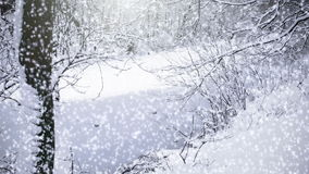 Neve de queda