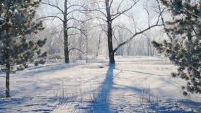 A neve de queda em um inverno estaciona com árvores cobertos de neve Foto de Stock Royalty Free
