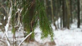 Neve de queda na floresta do abeto video estoque