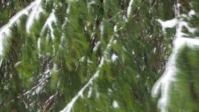 Neve de queda na floresta do abeto vídeos de arquivo