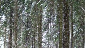Neve de queda na floresta do abeto filme