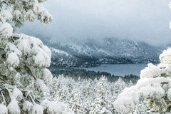 Neve de Tahoe Fotos de Stock Royalty Free