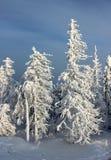 Neve degli alberi Immagine Stock