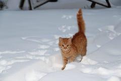 Neve del gatto Fotografia Stock