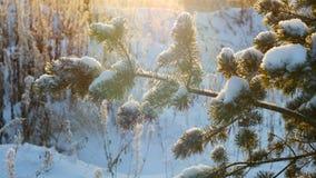 Neve del pino di natale di inverno Buon Natale e buon anno Fotografie Stock Libere da Diritti