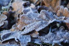 Neve del ramo dell'abete Fotografia Stock