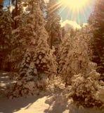 Neve del sole di inverno Fotografia Stock