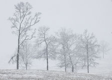 Neve del sud Fotografia Stock