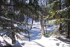 Neve del terreno boscoso fotografia stock libera da diritti