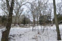 Neve del terreno boscoso Immagini Stock