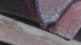 A neve derrete e a água deixa cair o gotejamento do telhado velho da casa vídeos de arquivo