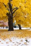 Neve di autunno Fotografia Stock Libera da Diritti