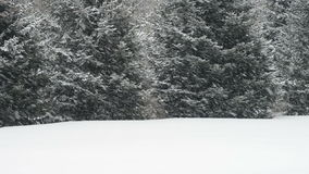 Neve di caduta nella bufera di neve durante l'inverno, sta nevicando! stock footage