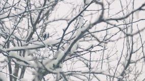 Neve di caduta sugli alberi dalla finestra, giardino di inverno archivi video