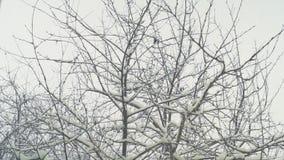Neve di caduta sugli alberi fuori la finestra stock footage