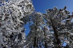 Neve di coverd della foresta immagine stock libera da diritti