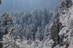 Neve di coverd della foresta immagine stock