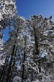 Neve di coverd della foresta Fotografie Stock