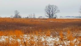 Neve 4 di febbraio dell'erba del fuoco dell'Indiana Fotografie Stock Libere da Diritti