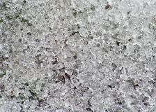 Neve di fusione Immagine Stock Libera da Diritti