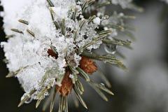Neve di fusione fotografie stock libere da diritti