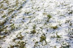 Neve di fusione Fotografia Stock Libera da Diritti