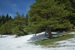 Neve di fusione in molla in anticipo Fotografia Stock Libera da Diritti