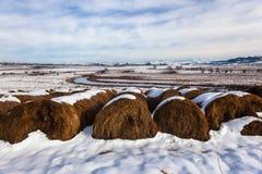 Neve di Hay Bales Cattle River Landscape dell'erba Immagini Stock