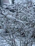 Neve di inverno Fotografie Stock