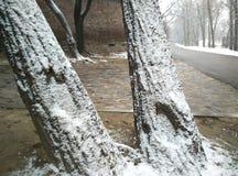 Neve di inverno Fotografia Stock Libera da Diritti