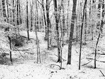 Neve di inverno del parco di quartiere Immagini Stock Libere da Diritti