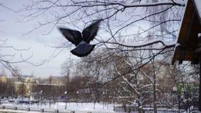 Neve di inverno nel parco di Gorkij fotografia stock